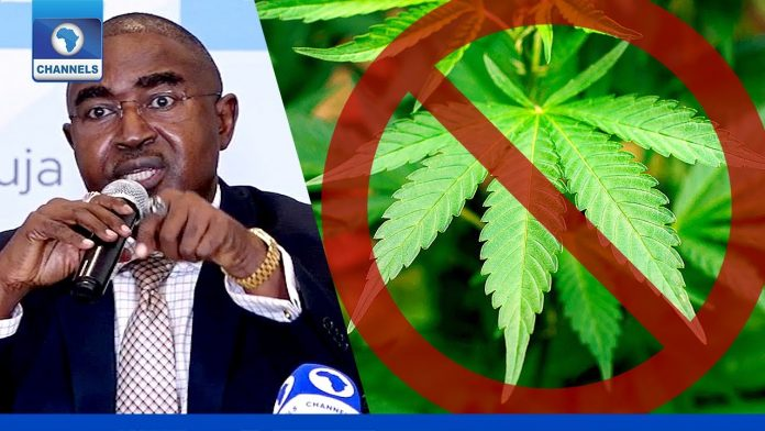 Why Cannabis can't be legalised in Nigeria — NDLEA